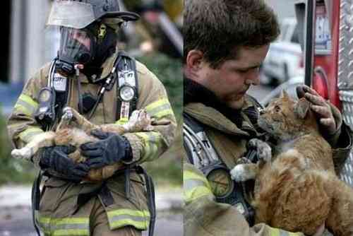 心打たれる…動物を助けるために奮闘する人々の写真をご覧ください