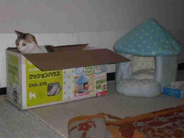 ネコちゃん、大よろこび!『ネコ用アイデア家具』たち