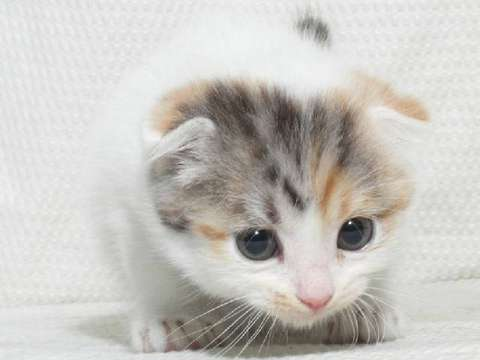 「2月22日」猫の日!語尾にニャーをつけるトピだニャー