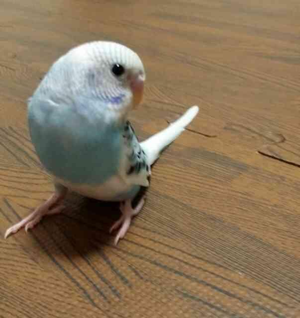 鳥さんに癒されるトピ
