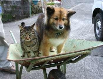 犬と猫飼ってる人集まれー!