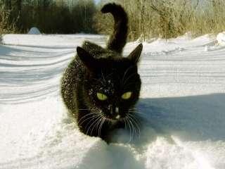 雪と動物たちの画像