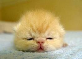 超リラックスしている【動物画像】トピ♪
