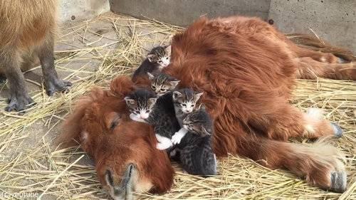 面白い動物画像を貼って個性の強そうな動物園を開園しましょう