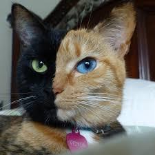 黒猫好きな人語りましょう♡
