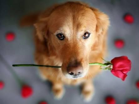 動物と花の画像を貼るトピ