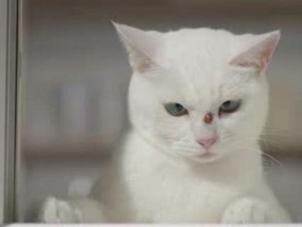 ネコのいるCM