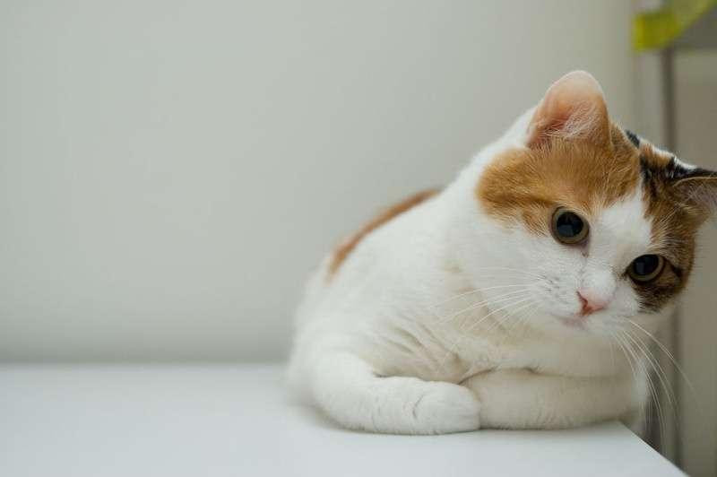 三毛猫さん、集合!