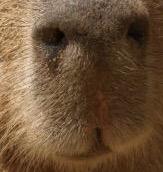 動物の口元画像を貼って時々当ててもらうトピ