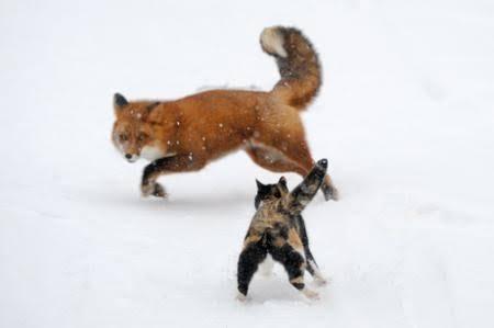 キツネが好き!