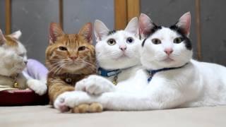 ネコの手の上に手を置くと、更に上に被せてくるのはどうして?