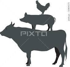 牛VS豚VS鶏