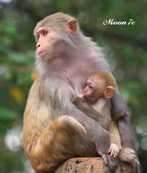 赤ちゃんを抱っこしないのって、いけないことですか?