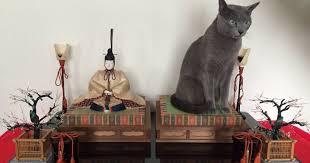【微閲覧注意?】「ヤバイ、母が発狂しそう」猫のとんでもないイタズラに、飼い主震えあがる