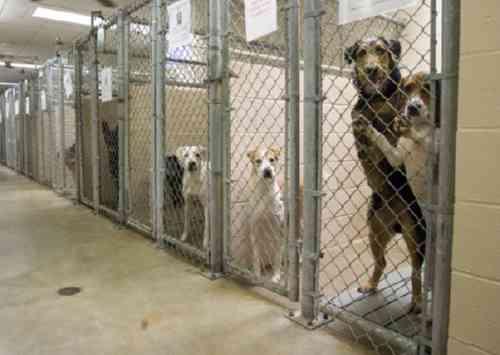 2月のこの時期、「動物愛護団体の電話が鳴りっぱなし」になる悲しい理由とは…