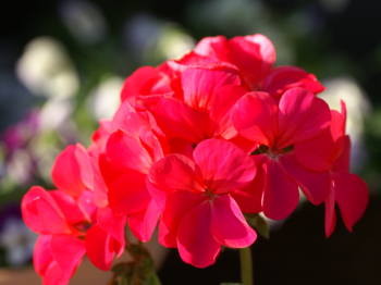 自分の誕生花、ご存知ですか?