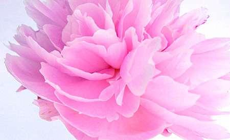芸能人を花に例えるトピ