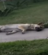 電動カートで犬を引きずりまわした男を逮捕(米)<動画あり・閲覧注意>