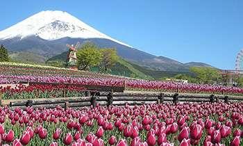全国の春(初夏も)のお花畑を教えてください