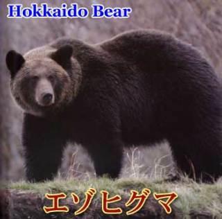 秋田「人食いグマ」、3頭残存か…額に古傷、赤毛、気性が荒いなどそれぞれに特徴