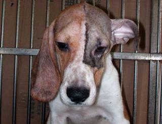 ブラジル・リオデジャネイロ、ペットの整形手術禁止へ