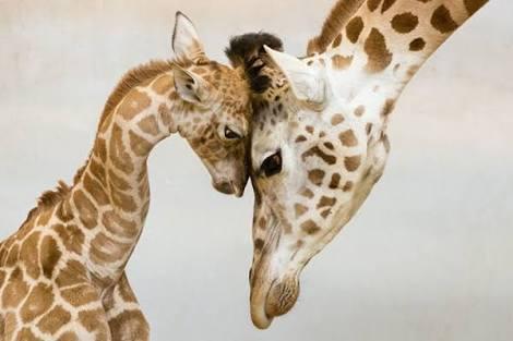 【動物】そっくり親子