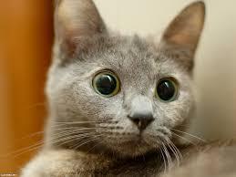 ニャー以外の猫の鳴き声