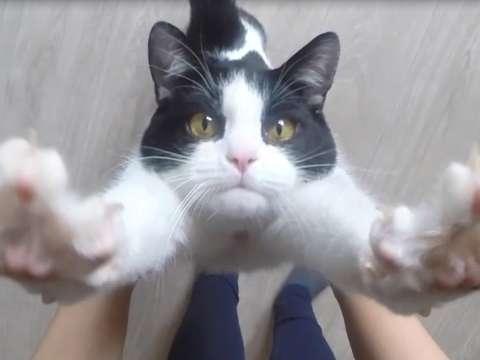 猫と暮らす楽しさ