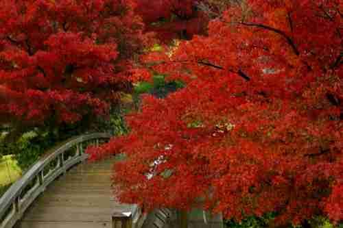 日本庭園に癒されるトピ