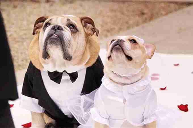 結婚・結婚式を控えている中での転職はどう思いますか?