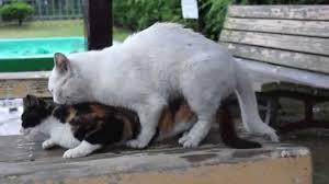 ふわふわした動物が見たい!