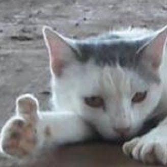 「うちの猫には…明らかに『親指』がある」人気を呼んでいた1枚