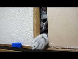 猫にストーカーされてる人