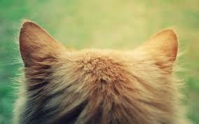 【画像】猫の後頭部が見たい