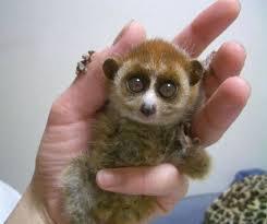 ぴょんからのぴょーん!呼ぶと見事なワンバウンドで手のひらまで跳んでくるお猿さんがかわいい
