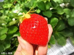 苺を使ったスイーツを貼るトピ
