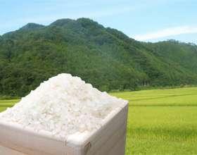 1ヶ月で米何キロ消費しますか?