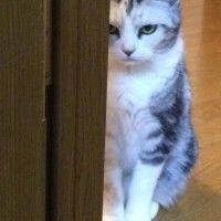 【画像】不機嫌な動物達