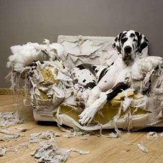 【犬・猫】ペットがいたずらしちゃった画像が見たい【動物・かわいい】