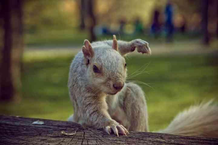 面白ポーズの動物画像