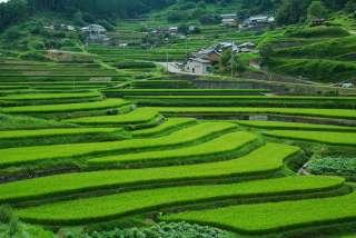 田んぼ、棚田の風景を見るのが好きな方
