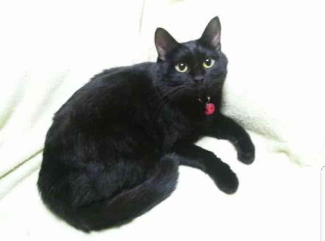 【画像】黒猫&白猫トピ