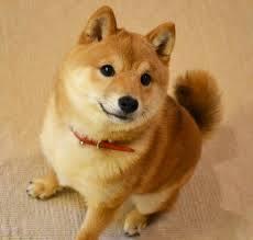 犬大好き!