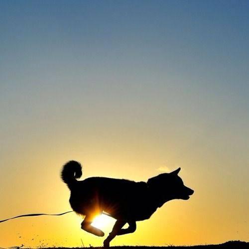 年賀状、年賀メールに使える犬の画像ください