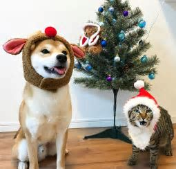 猫と犬の仲良し画像を貼っていくトピ