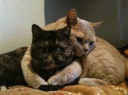 【妄想トピ】背中をギュッと抱きしめて暖めてもらえるなら