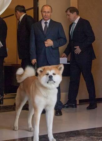 フィギュア・ザギトワ選手「秋田犬欲しい」と母におねだり、秋田県と大館市が秋田犬のぬいぐるみ贈る