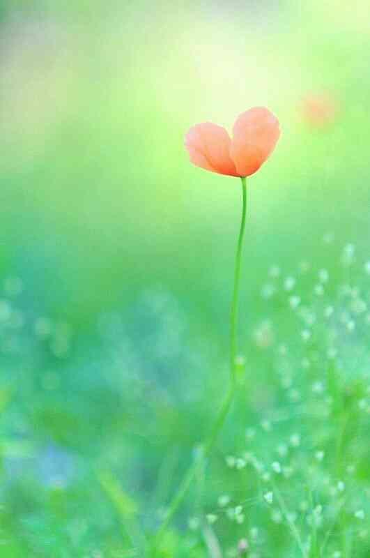 可愛い花の画像が欲しい