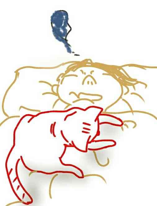 飼っているぺットは夜どこで寝ていますか?