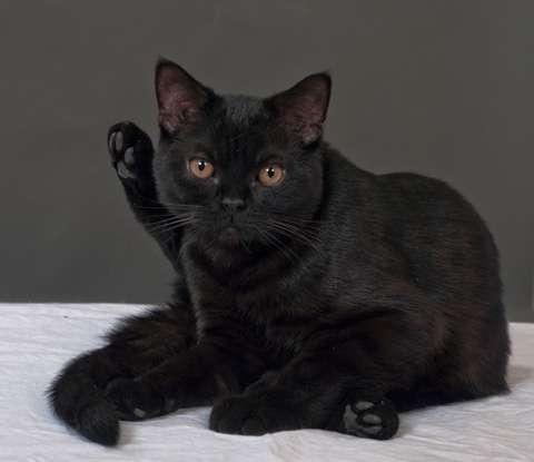 猫の雑学教えてください(^-^)